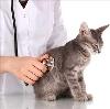 Ветеринарные клиники в Льве Толстом